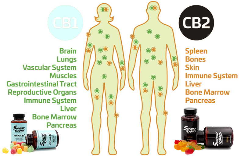 What is Sunday Scaries CBD Gummies?